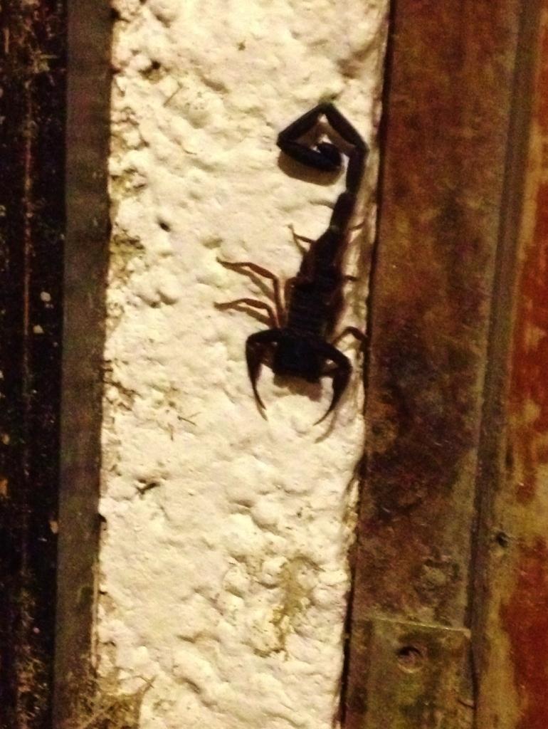 Scorpion in the doorway
