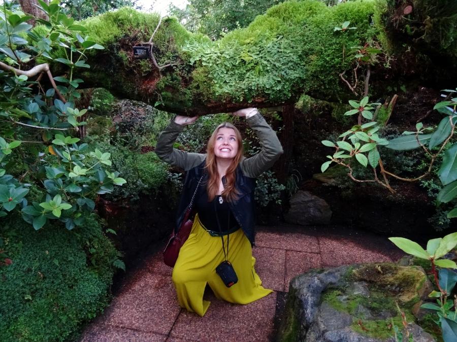 Montane Gardens